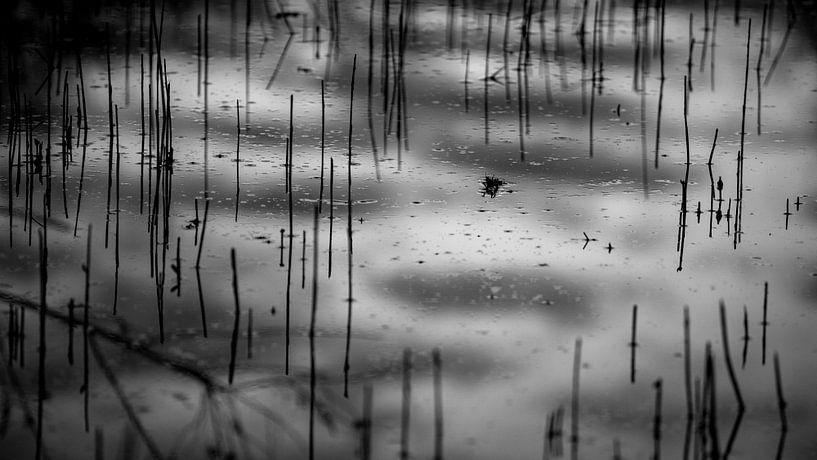 riet in water, reflecties van de lucht kleuren het plaatje in van Studio de Waay