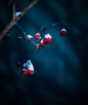 Winterstemming van Maria Almyra