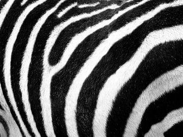 Zebra print von Fabian  van Bakel
