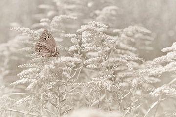 Schmetterling von Violetta Honkisz