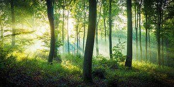 Herbstlicht im Wald von Martin Wasilewski