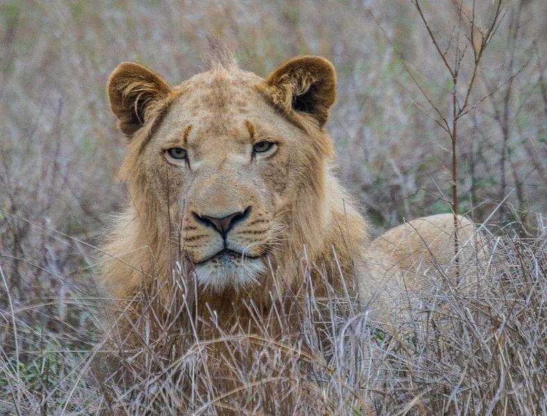 The Lion King van Lizanne van Spanje