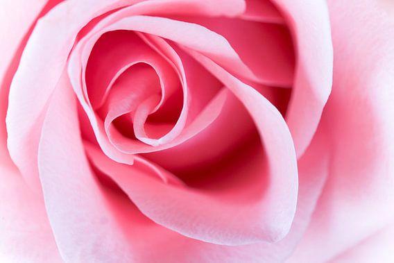 Pink Aura van Maarten Scholder