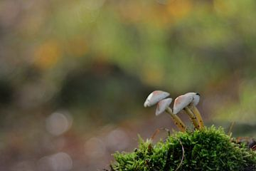 Pilz von Ferhat Yildiz