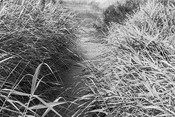 Fußweg in schwarz und weiß von Consala van  der Griend