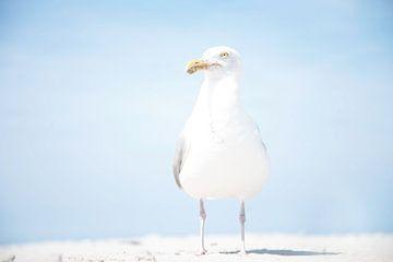 Meeuw op het strand von R Alleman