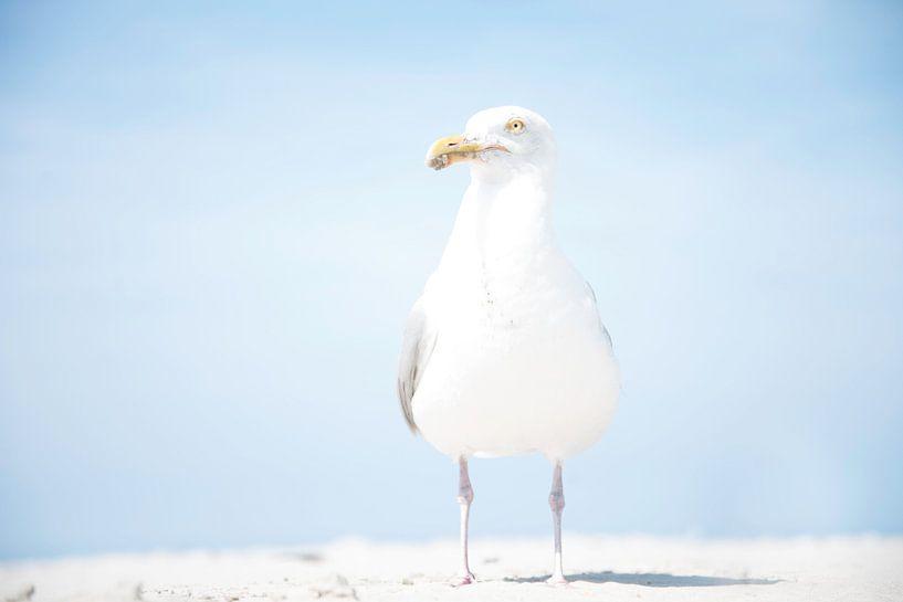 Meeuw op het strand van R Alleman