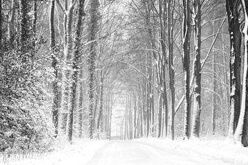 Boslandschap in de sneeuw (zw/wit uivoering) van Francis Dost