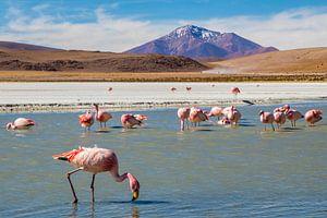 Hedionda lagune in Bolivia met flamingo's van Eveline Dekkers