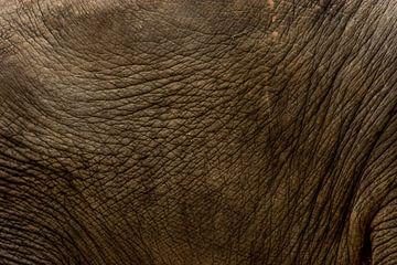 Huid van een olifant von Renate Peppenster