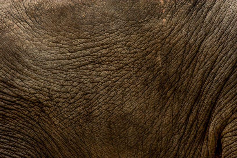 Huid van een olifant van Renate Peppenster