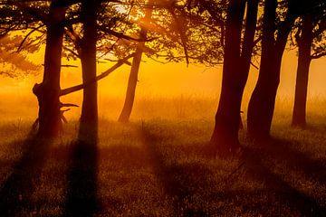 Doldersummerveld zonsopkomst / Doldersummerveld sunrise van Mark van der Walle