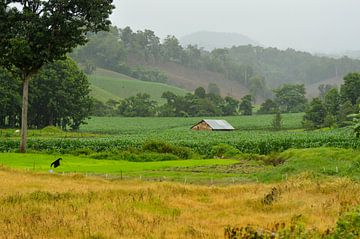 Groene velden in Thailand van Ezra Middelburg