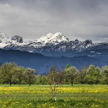 Grüne Wiese mit schneebedeckten Alpen von Patrik Lovrin