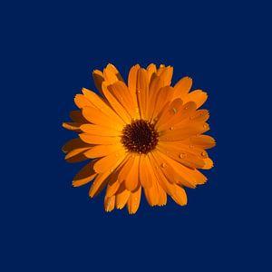 Orange Power Flower