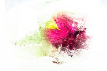 Blume im Eis von Clazien Boot