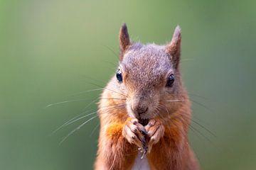 Eichhörnchen 3