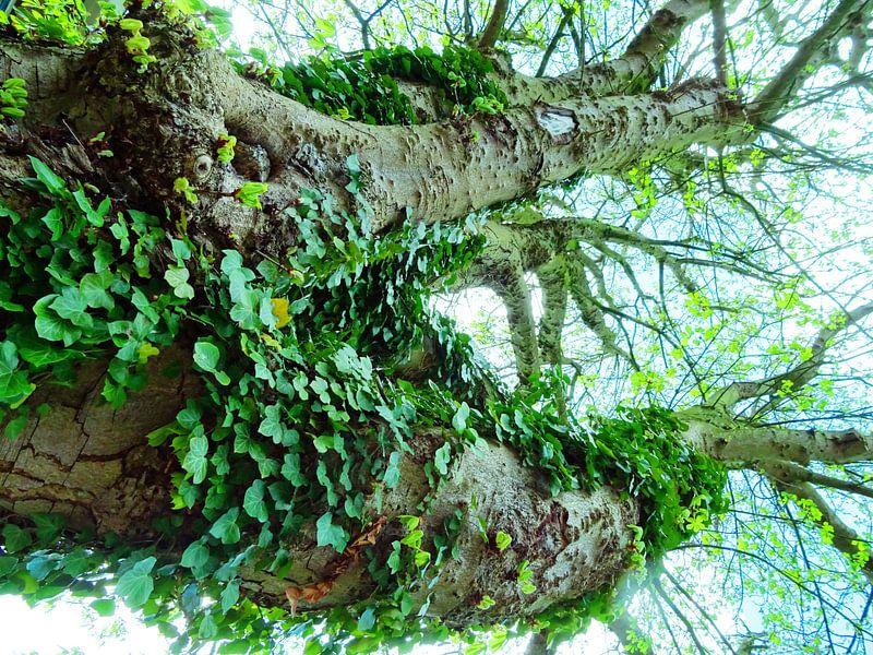 Tree Magic 109 van MoArt (Maurice Heuts)
