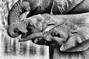 Junge afrikanische Savannenelefanten von Karsten van Dam