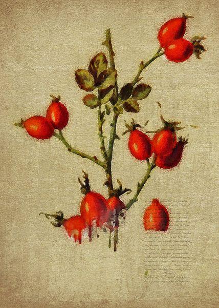 Rode bessen van Jan Keteleer