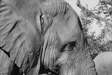 Olifant van GoWildGoNaturepictures