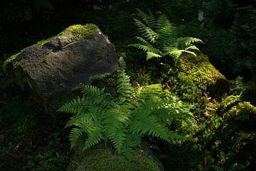 Japanischer Garten von Martijn Stoppels