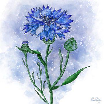 Blumenmotiv - Kornblume