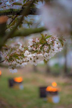 Vuurpotten tussen kersenbomen von Moetwil en van Dijk - Fotografie