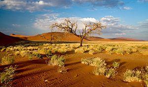 Namib woestijn nabij dune 7, Sosuvlei, Namibië