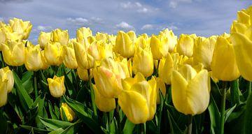 Mooi geel! von Joke Beers-Blom
