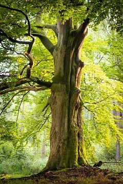 Baum im Wald von Michel Geluk