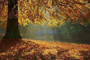 Boom in herfstkleuren en  blauwe brug