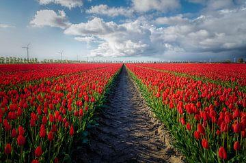 Tulpen symmetrie von Joris Pannemans - Loris Photography