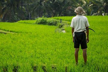 Landarbeider voor rijstvelden - Bali, Indonesië. van