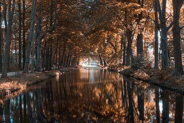 Bäume auf dem Wasser von Stephen Young