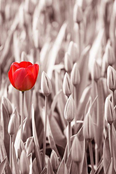 Alleen, maar niet eenzaam van Pieter van Dieren