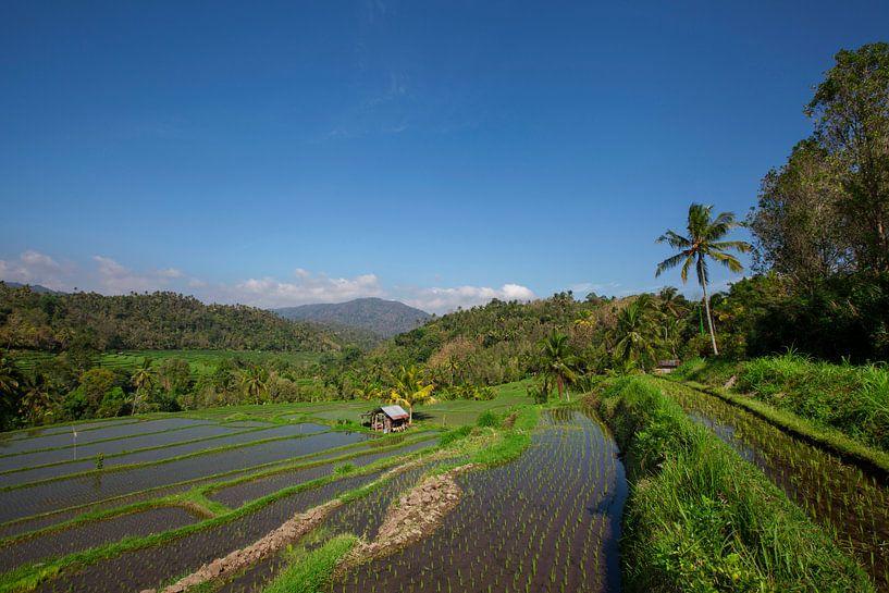 Brede groene rijstterrassen op Bali, Indonesië van Tjeerd Kruse