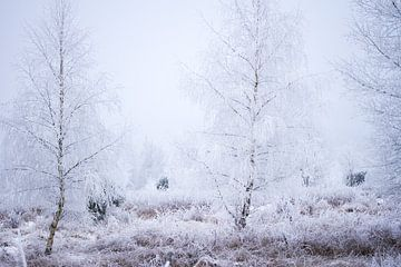 Heideflächen in einer Winterlandschaft von Karijn | Fine art Natuur en Reis Fotografie