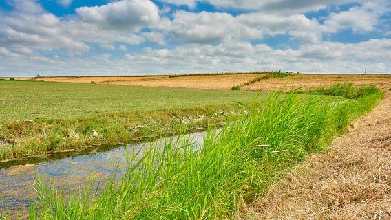 zomerlandschap Noord-Holland