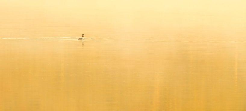 Fuut in de mist van Erik Veldkamp