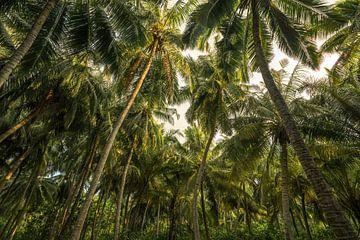 Enkele palmboompjes van
