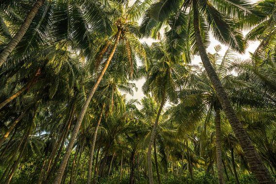 Enkele palmboompjes