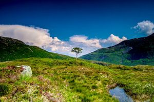 Solitaire boom in Svartevatnet - Noorwegen