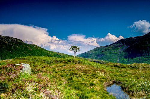 Solitaire boom in Svartevatnet - Noorwegen van Ricardo Bouman