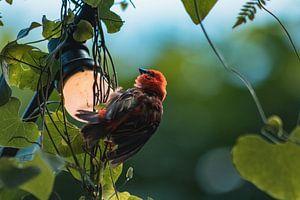 Klein vogeltje rustend op lampje van