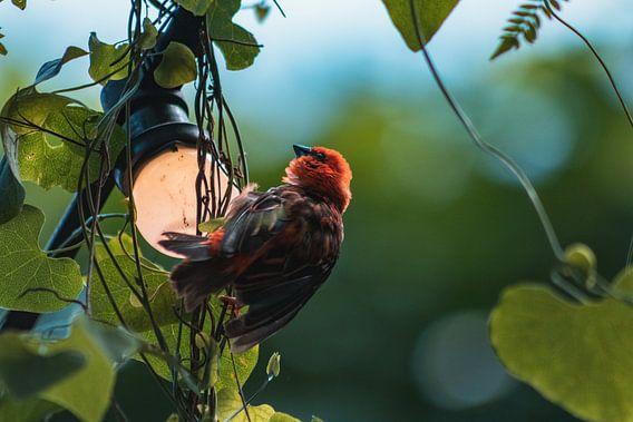 Klein vogeltje rustend op lampje