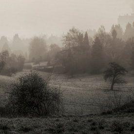 Fog in the morning van Carina Buchspies