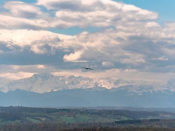Vogel in de lucht met bergen op de achtergrond van