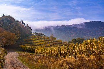Vignes du Palatinat, Wijnhellingen du Palatinat sur Karin Luttmer