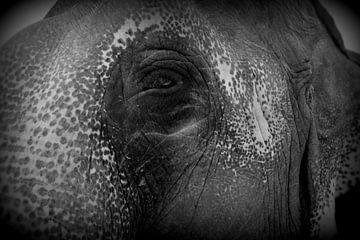 Elefantenauge von Lou Wall